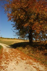Autumn-path-in-Belvedur