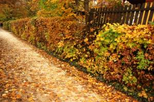 Autumn-path-near-fence